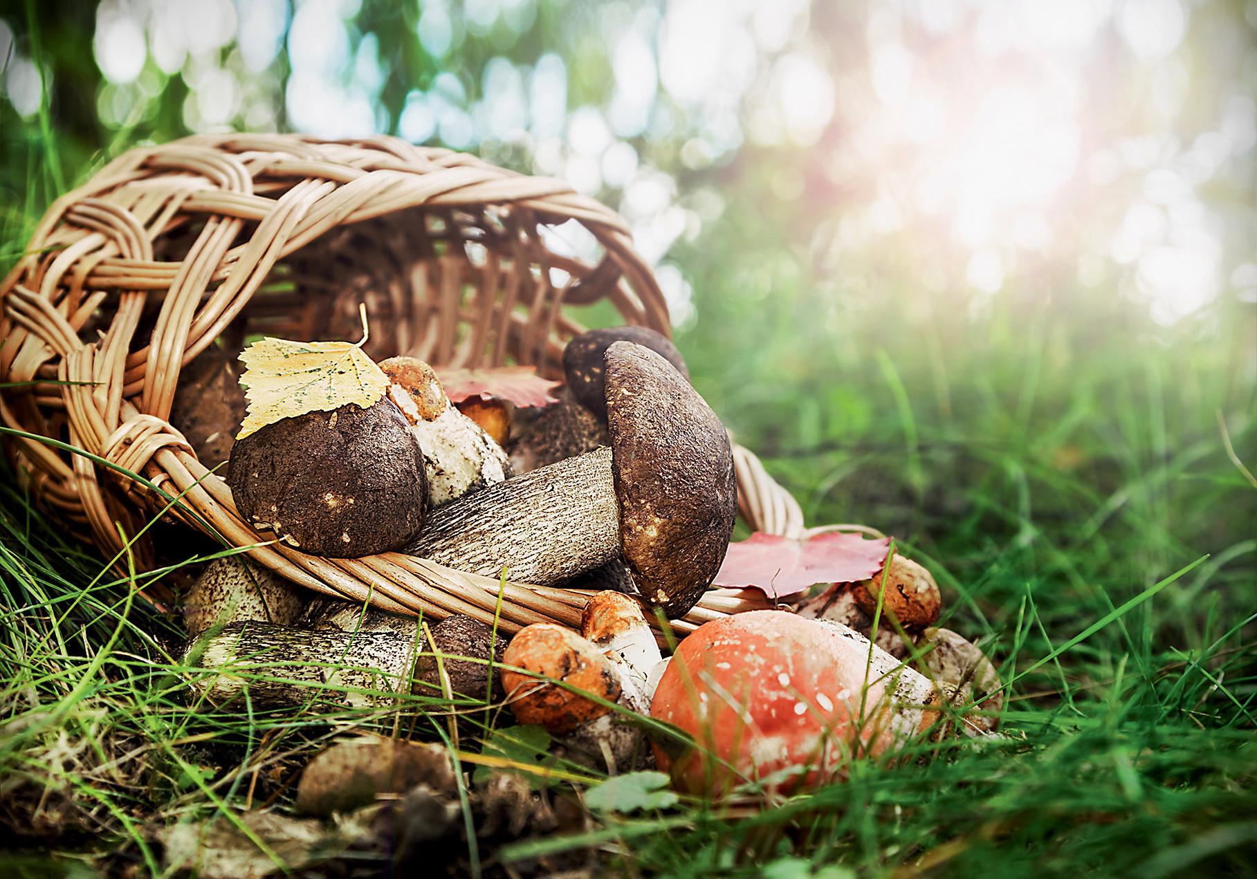 Чем опасны съедобные грибы: полезные советы