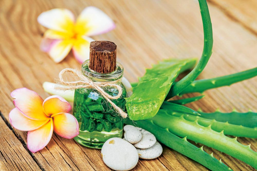 Лечебные свойства алоэ вера - зеленое золото у вас дома!