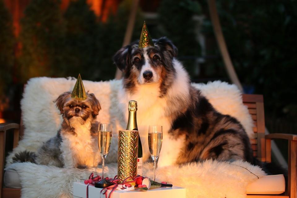 В каких цветах встречать год Собаки, чтобы привлечь счастье?