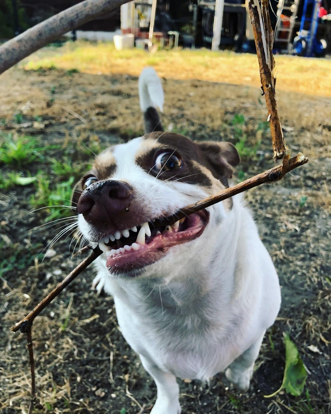 Бешеный пес из Лос-Анджелеса покорил Instagram