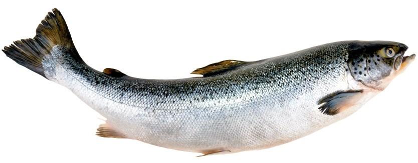 Этот элемент входит в состав костной ткани и зубов. Кроме того, обмен фосфора в организме тесно связан с кальциевым. Самые богатые источники фосфора – молочные продукты, морская рыба, пла...