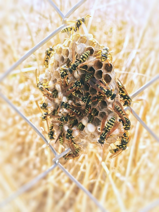 В реальной жизни осы приносят мало позитивных эмоций, и во сне - аналогичная ситуация. Такой сон практически всегда несет в себе негативный подтекст, а большинство сонников сходятся во мн...
