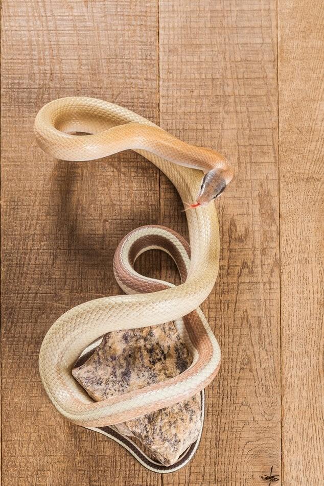 Появление змеи в твоем сне гово...