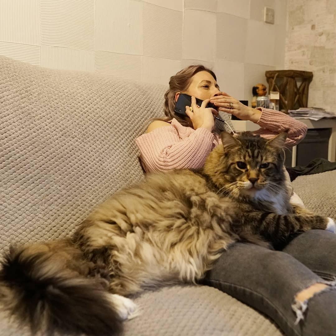 @ludo_worlds_biggest_cat