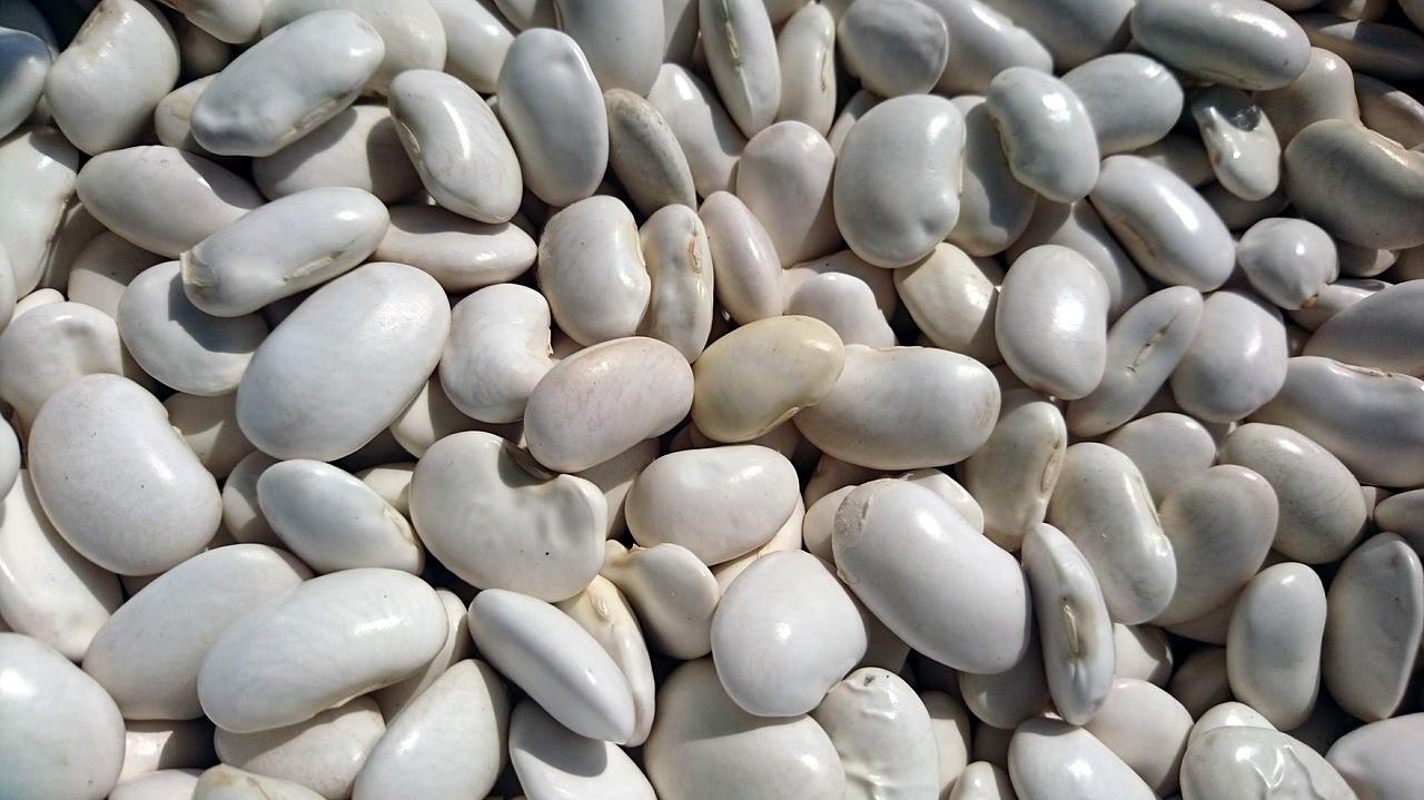 8 сортов фасоли: их названия и применение