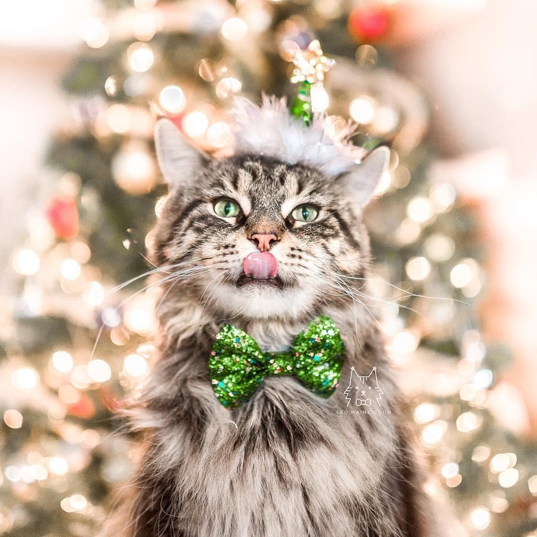 @cats_of_instagram