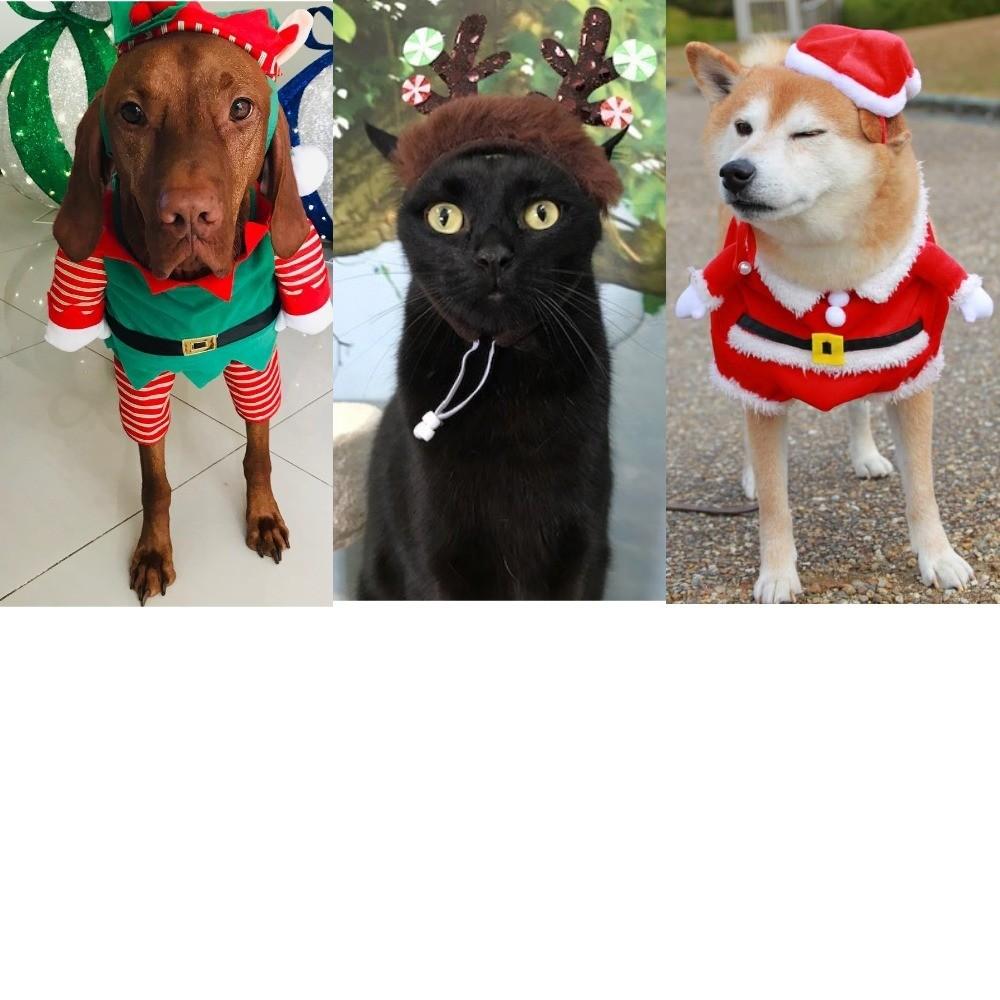Рождественский олень и Санта-Клаус: 50 идей новогодних костюмов для животных
