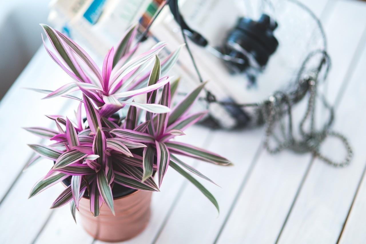 Лунный календарь: когда и как лучше всего ухаживать за растениями зимой