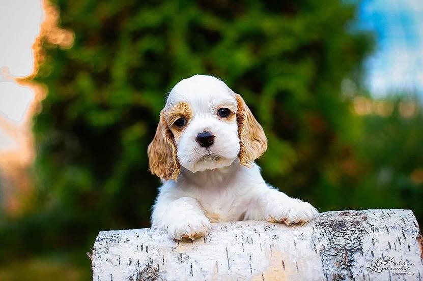 Топ-10 лучших пород собак для детей: от маленьких «нянек» до больших «охранников»