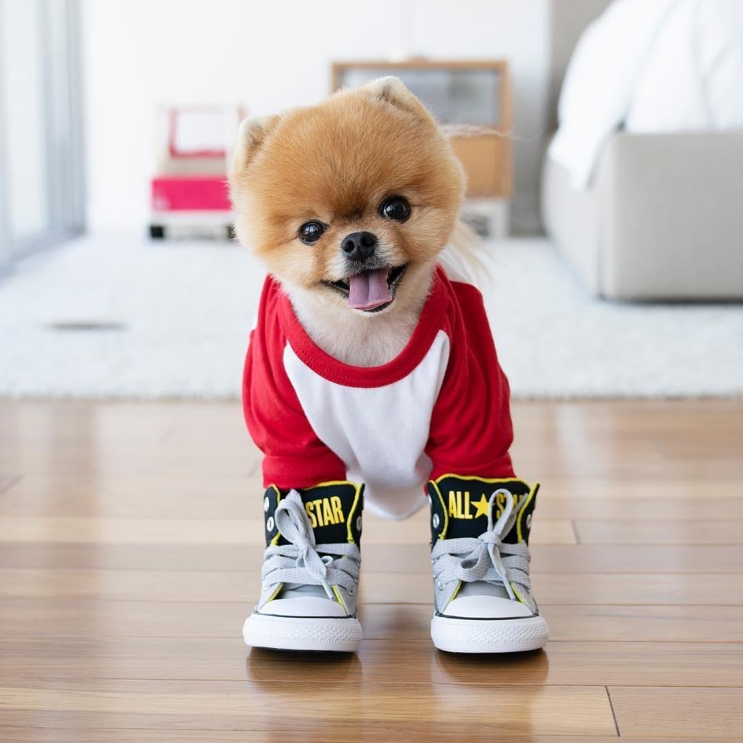 Пожалуй, это самая популярная исамая милая собачка вInstagram. Померанский шпиц покличке ДжиффПом имеет почти 9 миллионов подписчиков - еще немного, ион сможет составить конкуренцию О...