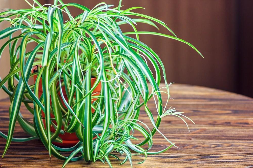 9 растений на подоконнике, которые продлевают молодость