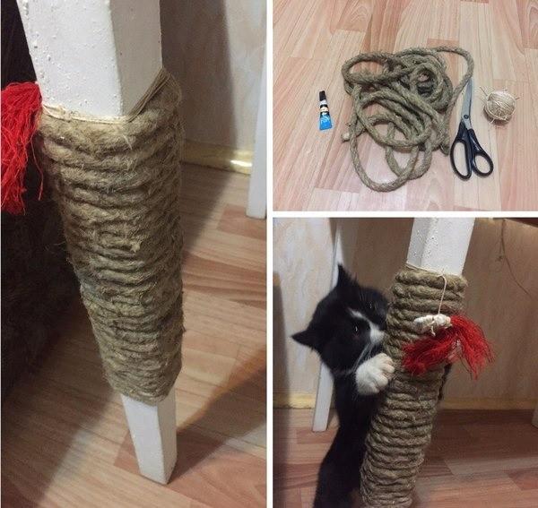 Как приучить взрослую или маленькую кошку к когтеточке