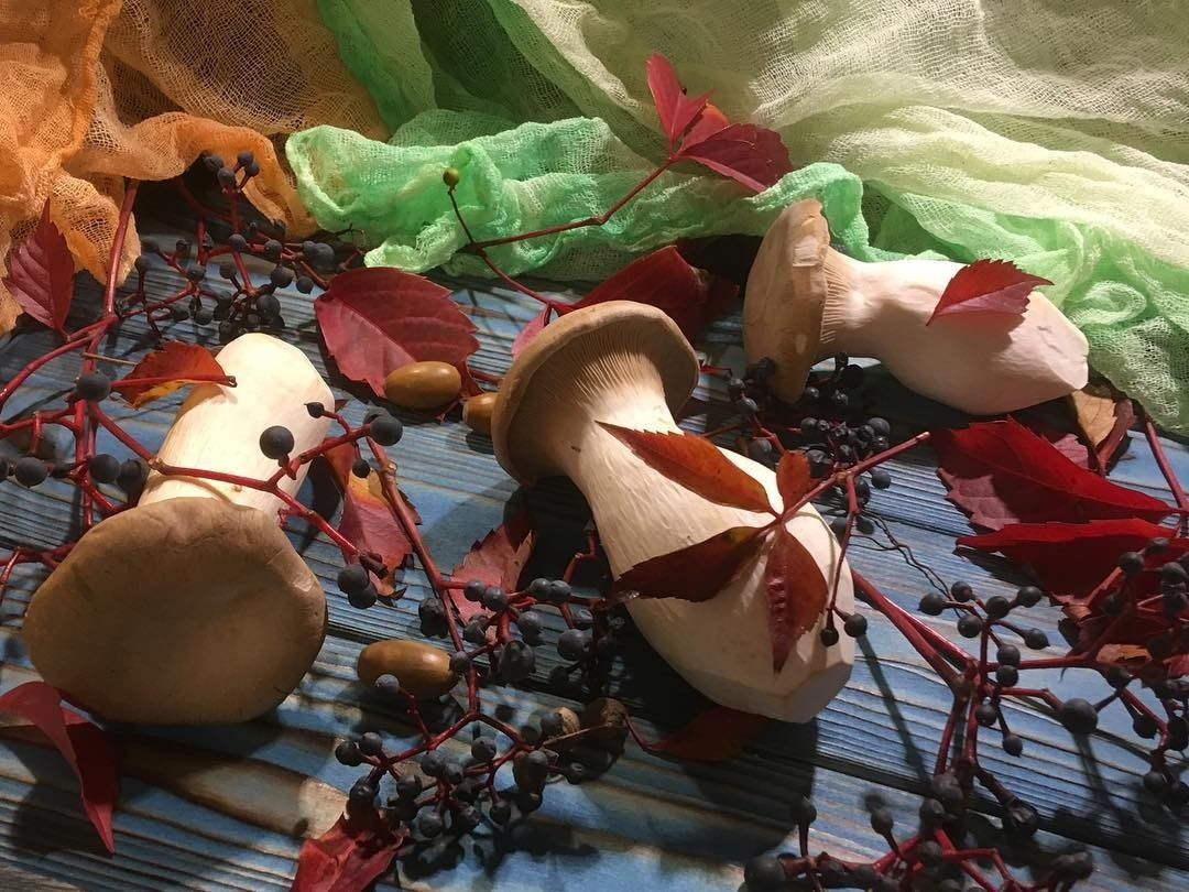 Как выращивать белые грибы в домашних условиях