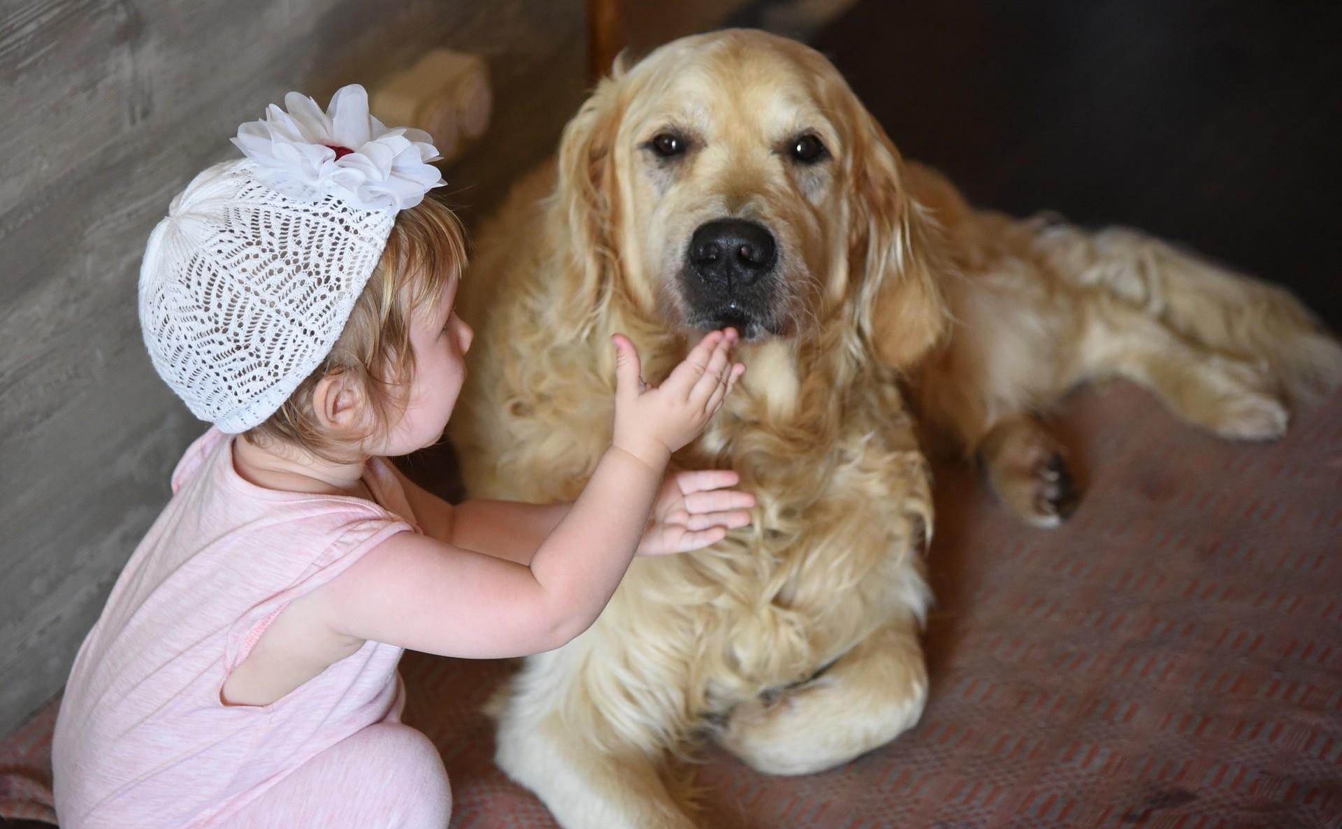 Заводим собаку для ребенка: 14 правил безопасности