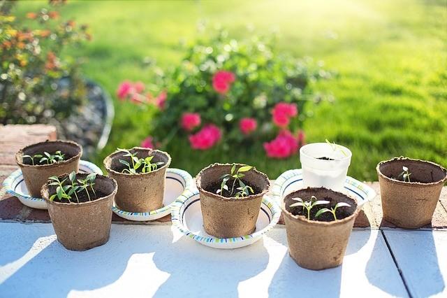 Как правильно сеять семена на рассаду? 6 советов