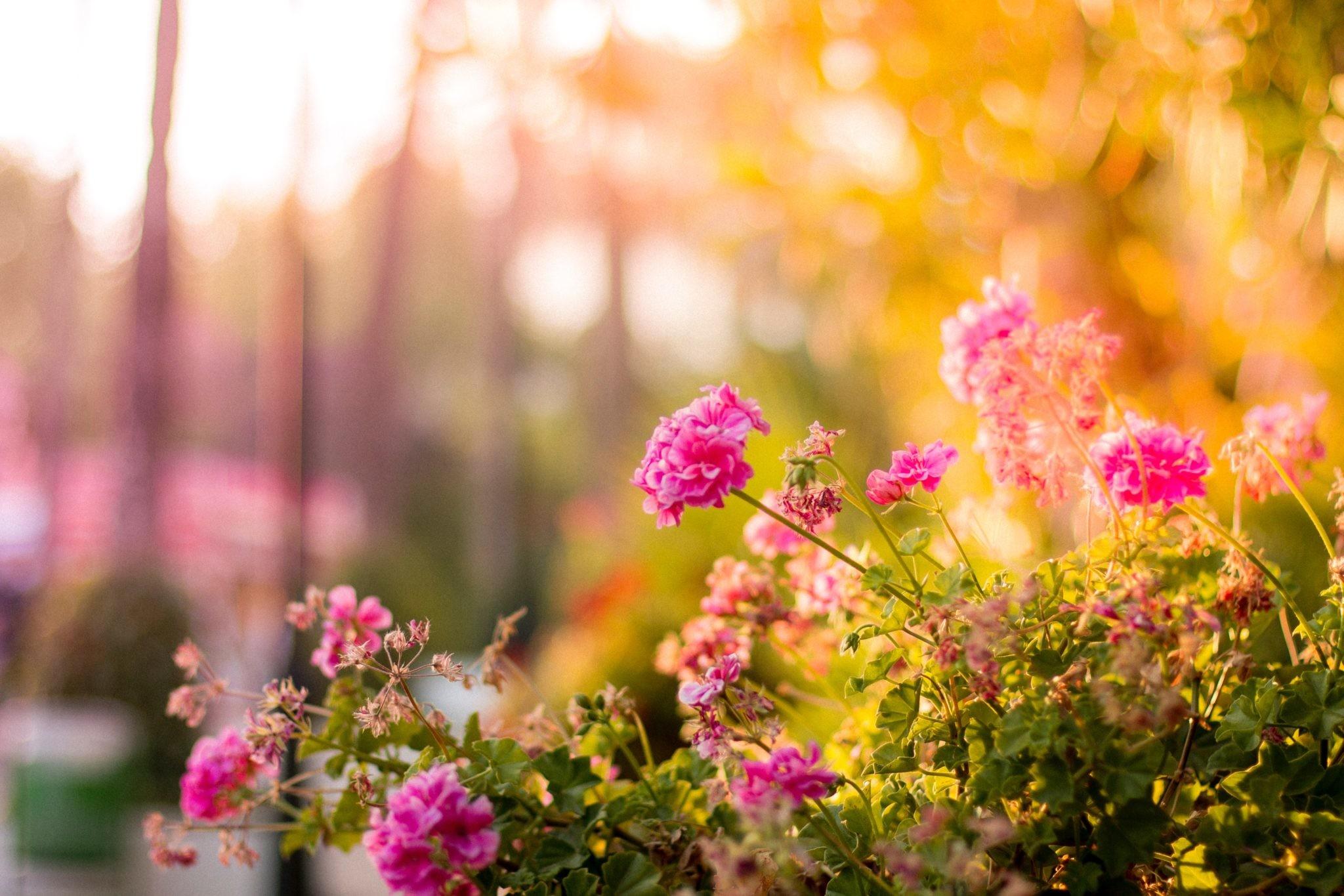 Простые и необычные идеи, как вырастить урожай на даче
