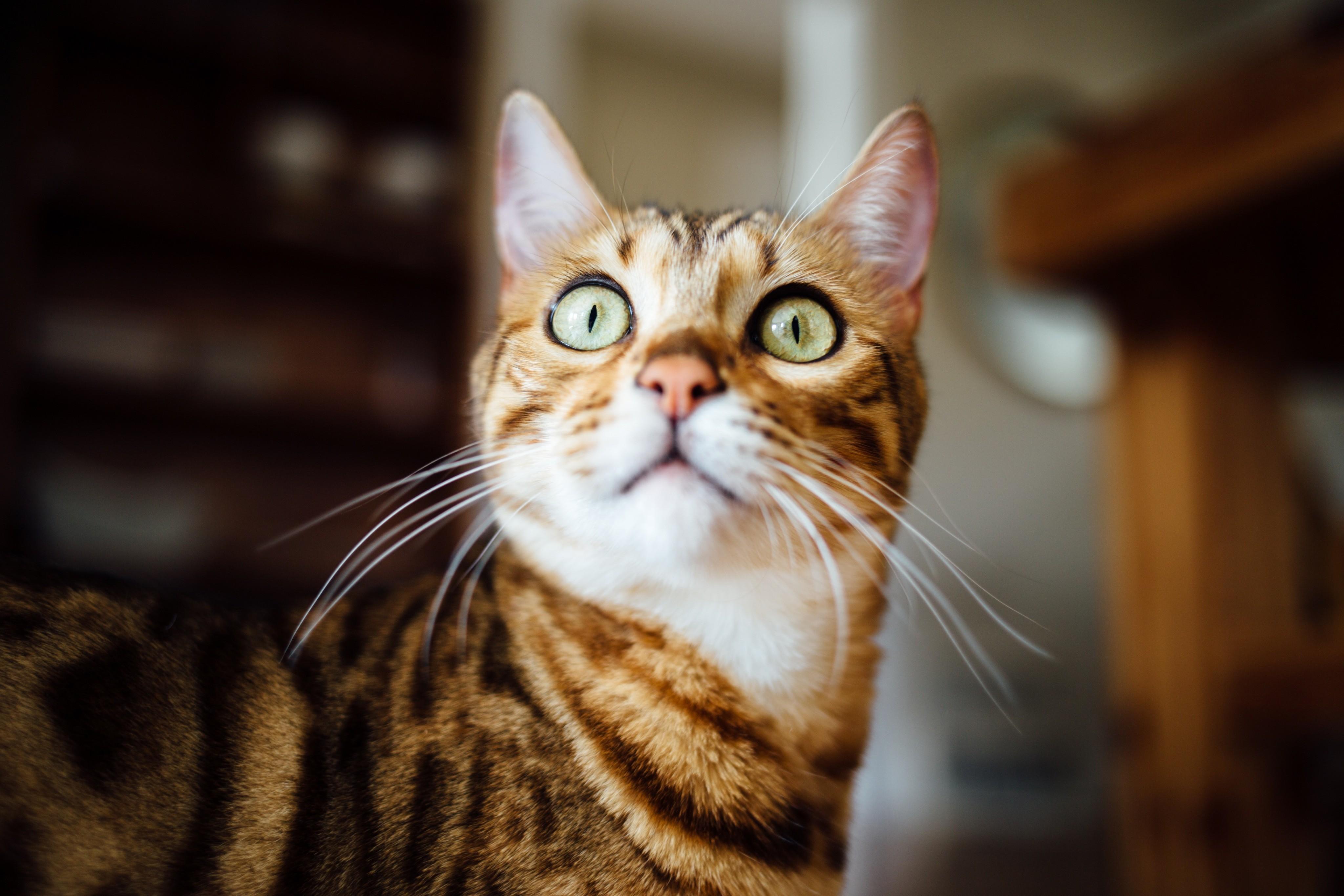 Почему коты боятся огурцов и еще 10 странных запросов в Яндексе