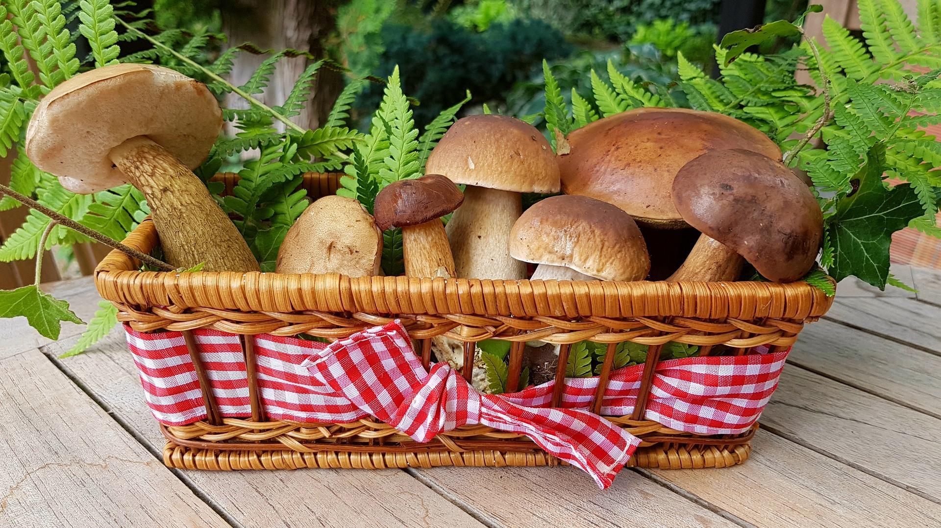 Изображение - Салат из лесных грибов рецепты с фото простые и вкусные fit_96_53_false_crop_1916_1078_1_0_133742_e4a6d406c1