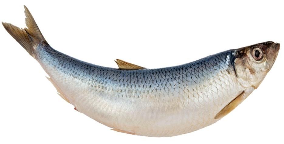 Полноценная замена красной рыбе (ценному источнику кислот омега-3) – обычная селедка. 85 г селедки содержит почти 150% суточной нормы витамина D и более 100% омега-3. Чтобы уменьшить коли...
