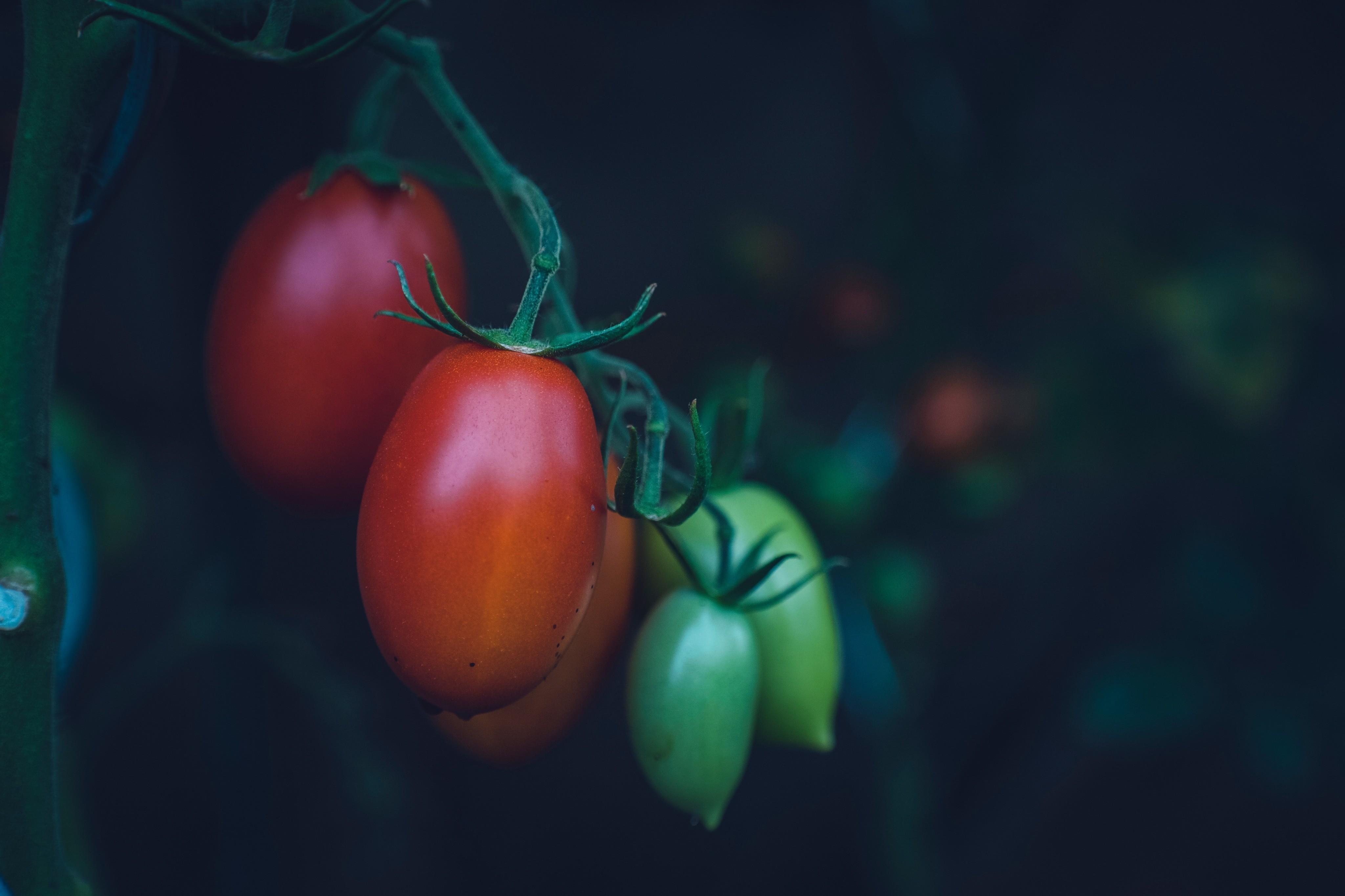 Что такое экопродукты? Вся правда об органической пище