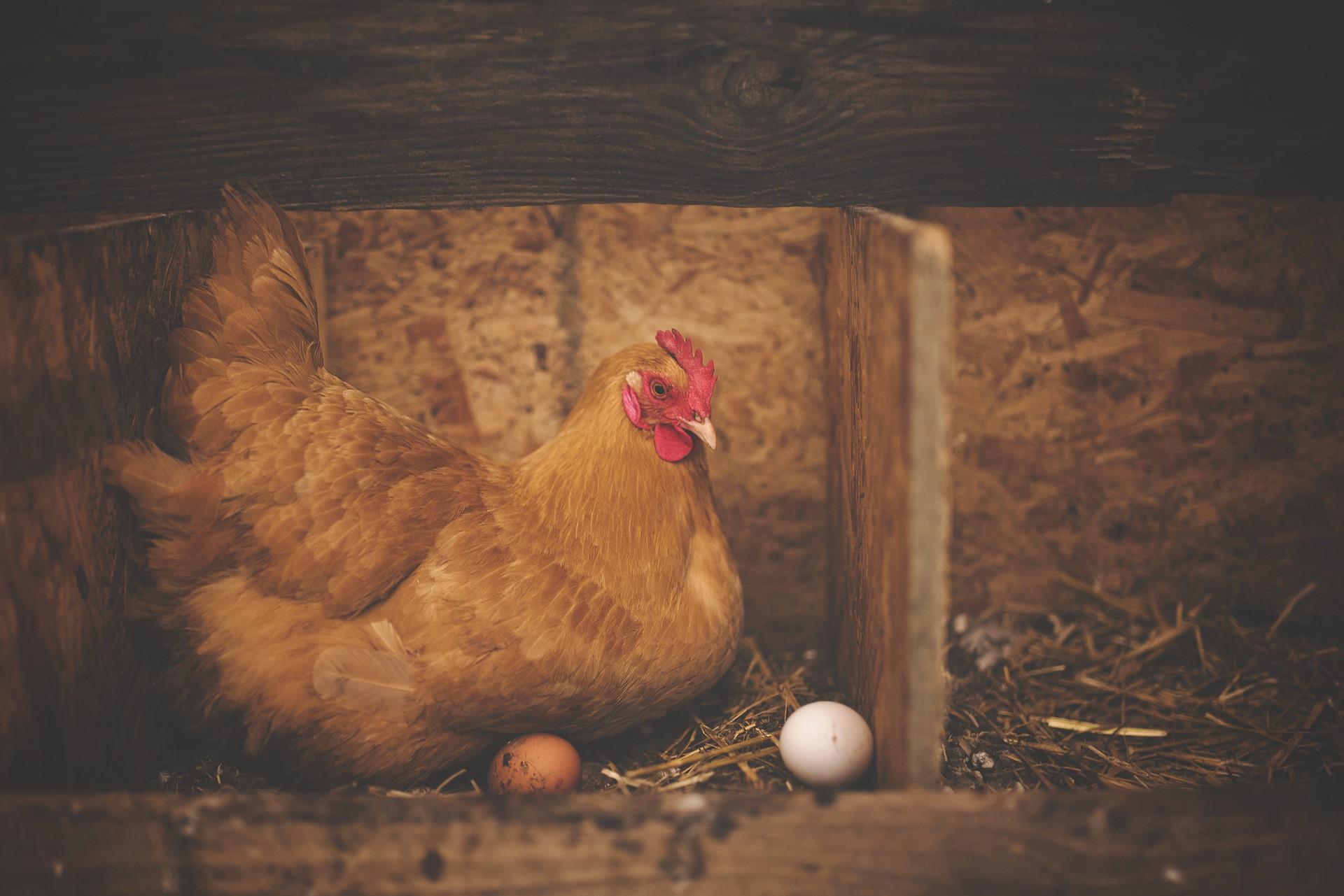 Птичий двор, гомонящий под ногами, тоже предвещает беременность. Важно увидеть в таком сновидении птичьи яйца – если ты их собираешь, значит, смело можешь покупать тест. Разбитое яйцо – п...
