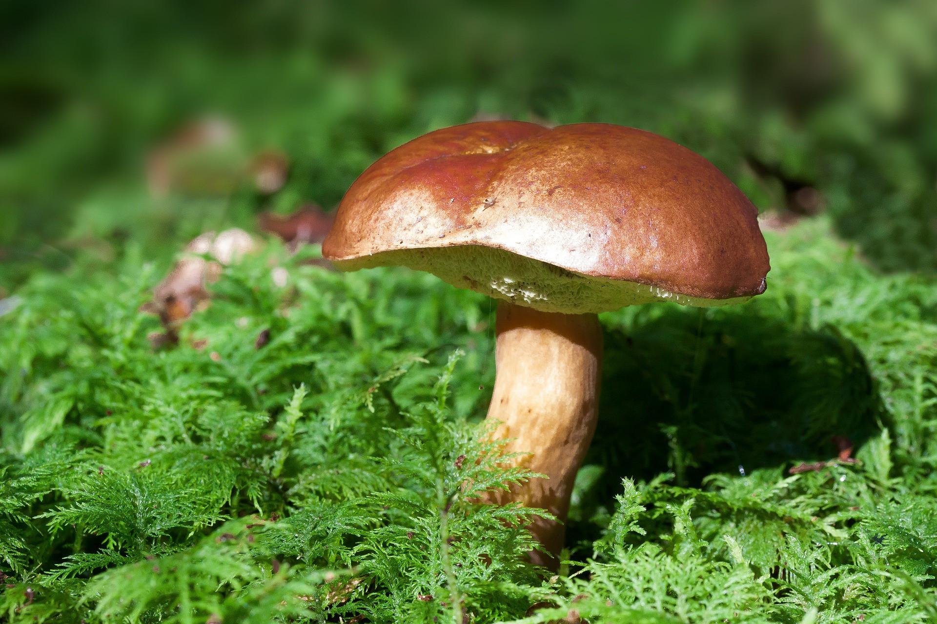 Крепкие, красивыегрибочки, которые ты собираешь в светлом, хорошо освещенном солнцем сухом лесу, предупреждает о скорой беременности. Сорт грибов не имеет значения, главное, чтобы они бы...