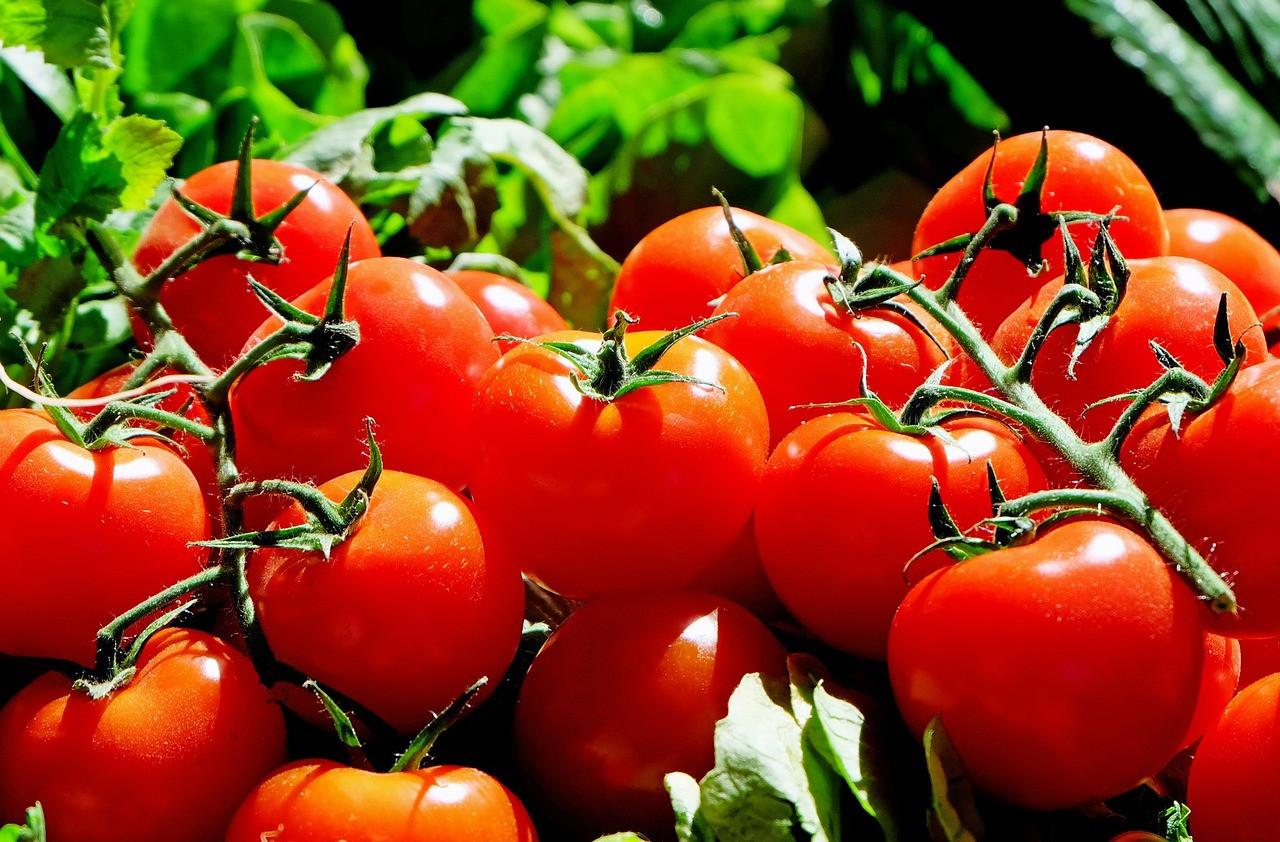 5 простых, но необычных блюд из помидоров на каждый день