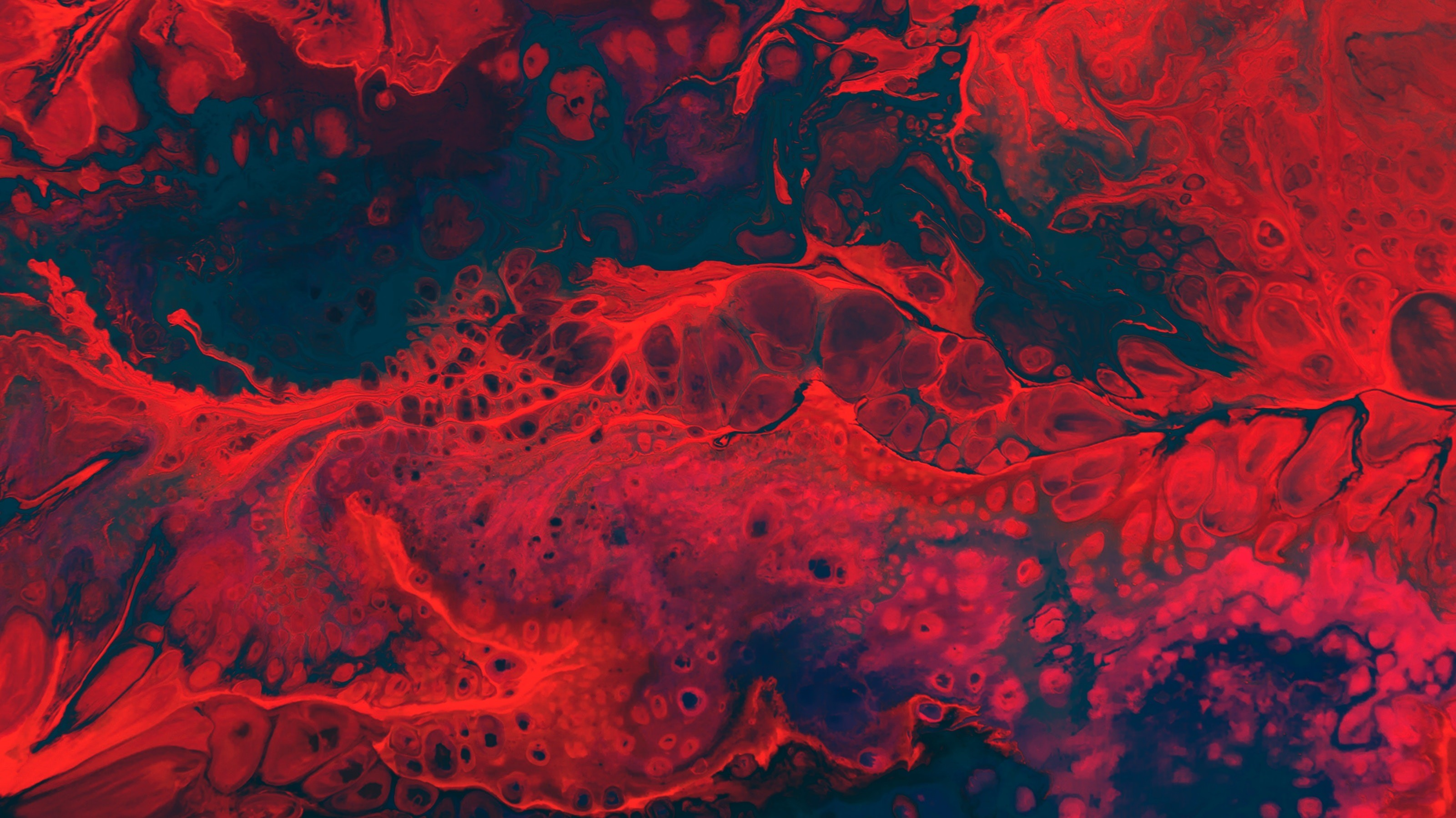 Как расшифровать общий анализ крови? Нормы и значения основных показателей