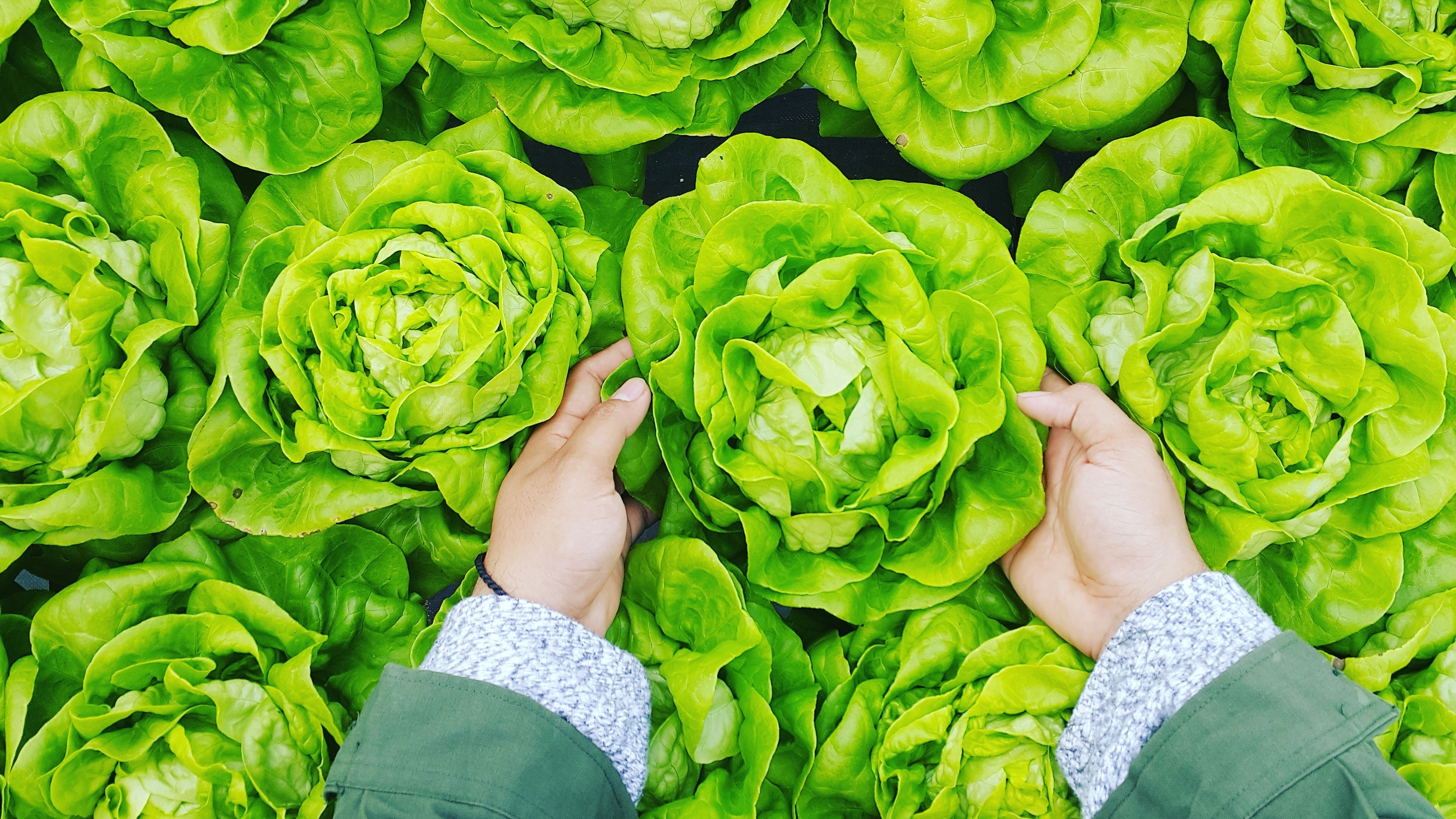 5 хитростей, как хранить зелень, чтобы она не завяла