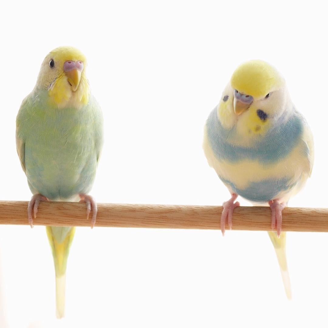 Ролик с балансирующими на канате попугаями набрал восемь миллионов просмотров в Instagram