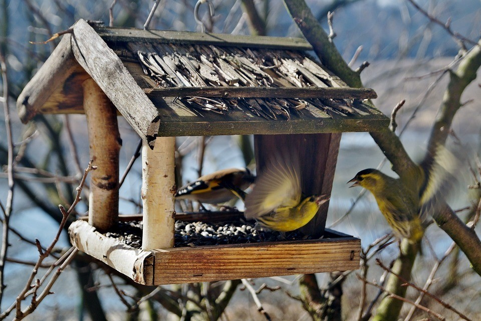 Корм для птиц зимой в кормушках: что можно, а что нельзя давать
