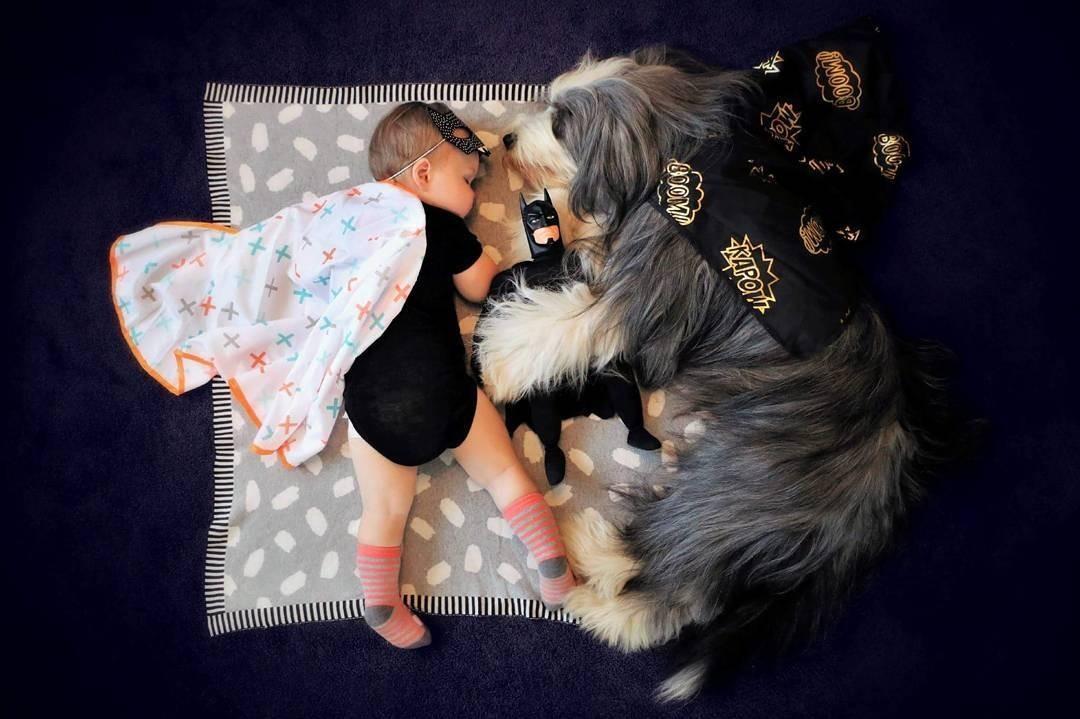 У ребенка не получается подружиться с собакой: советы пользователей соцсетей