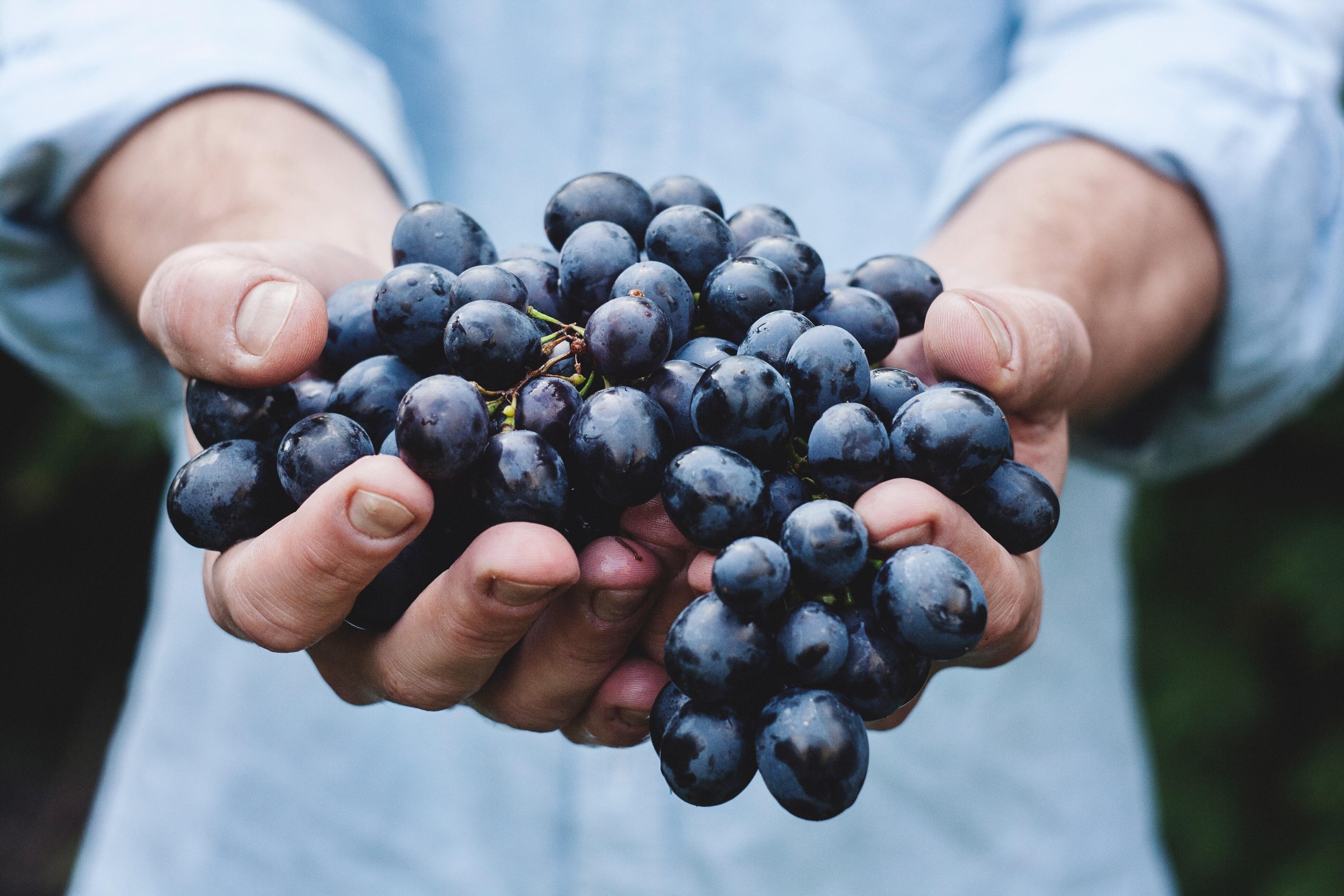 Домашнее вино из винограда: простой пошаговый рецепт