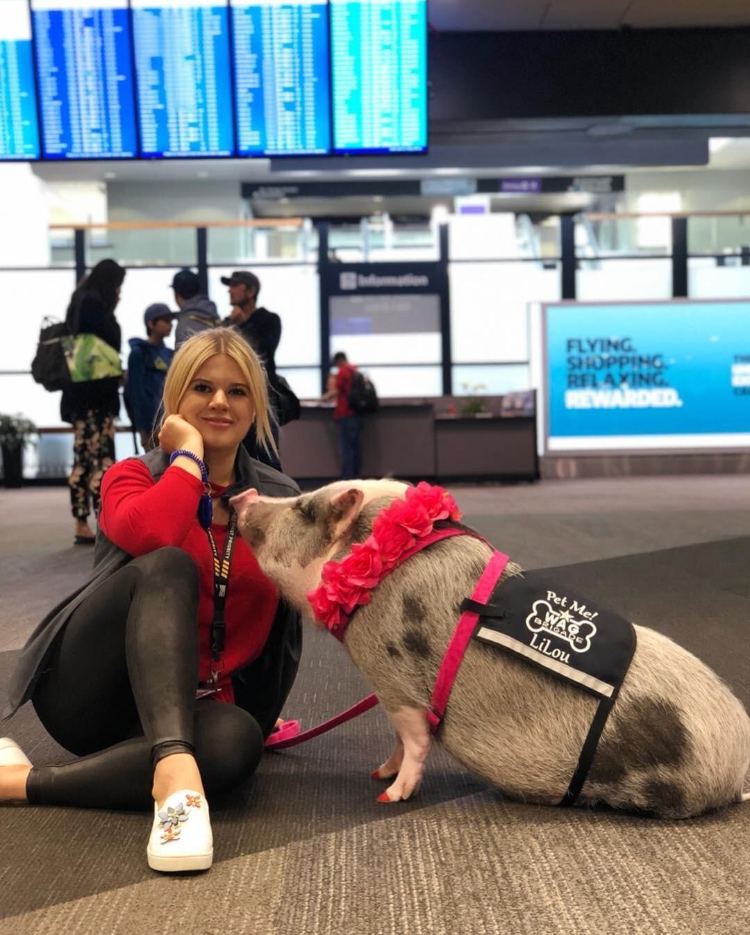 В аэропорту Сан-Франциско появилась свинья-терапевт (очень милое видео)