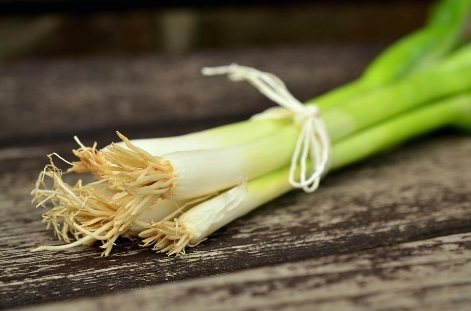 Домашний огород: как вырастить лук на подоконнике