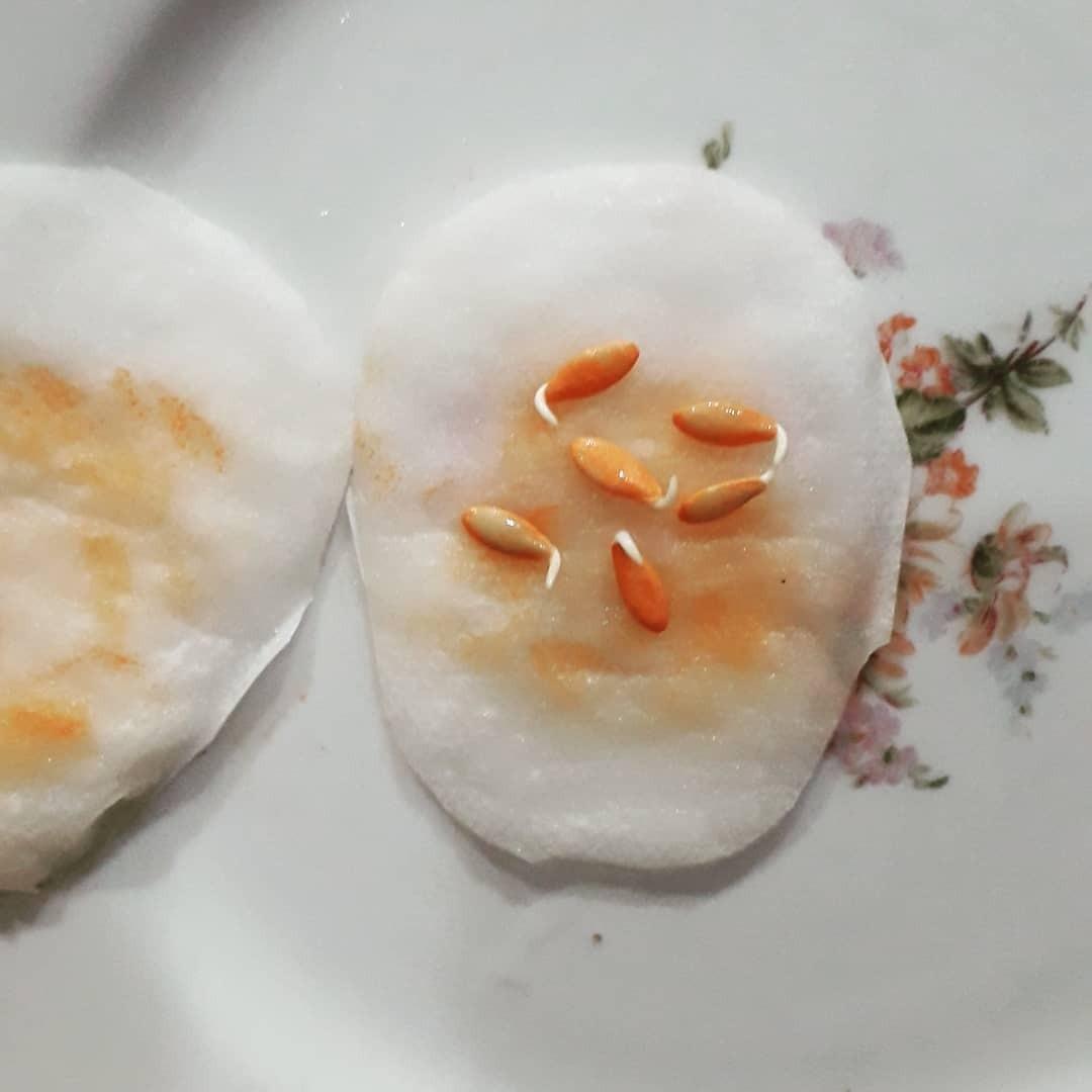Семена необходимо положить навлажную тканевую салфетку иположить втеплое место напару суток, периодически добавляя немного теплой воды. Когда семена проросли, следует выбрать самые кр...