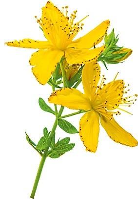 Насыпь в чайник 1 ст. л. цветков и&#1...