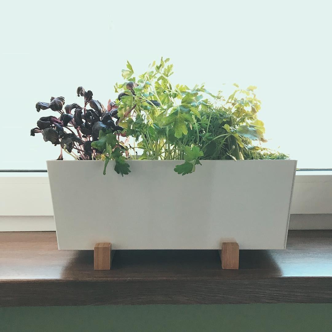 Огород круглый год: выращивание зелени на подоконнике в домашних условиях
