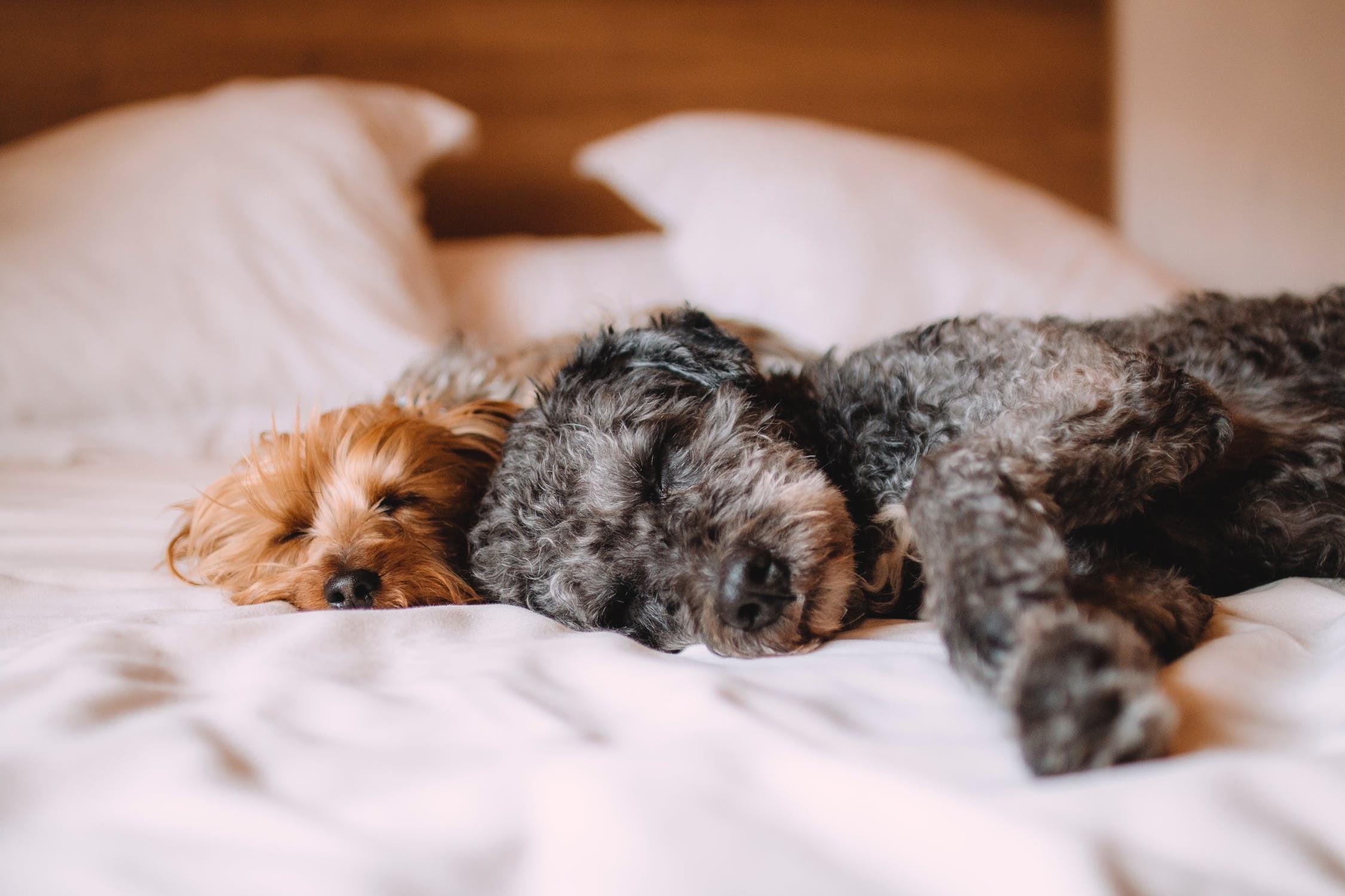 Какую собаку завести в квартире для ребенка: топ-7 лучших пород
