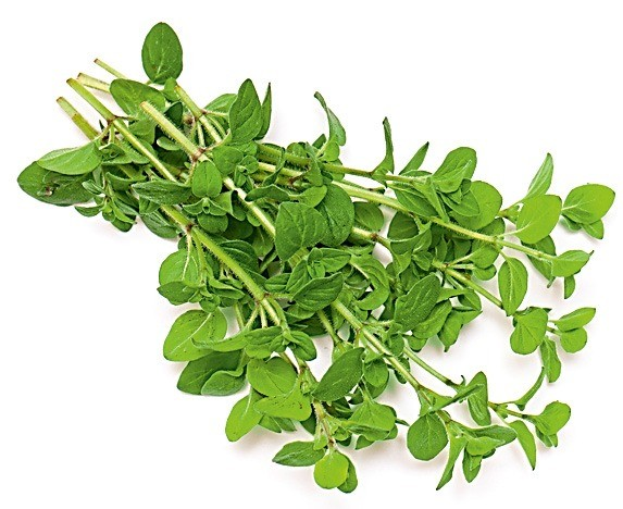 Настойка или чай помогают при вздутии живота. Еще майоранобладает согревающим эффектом, атакже содержит вещества, которые ускоряют наступление менструации.