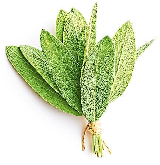В виде чая, свежий или вкачестве приправы, — шалфей обязательно поможет при приступах обильного потоотделения.