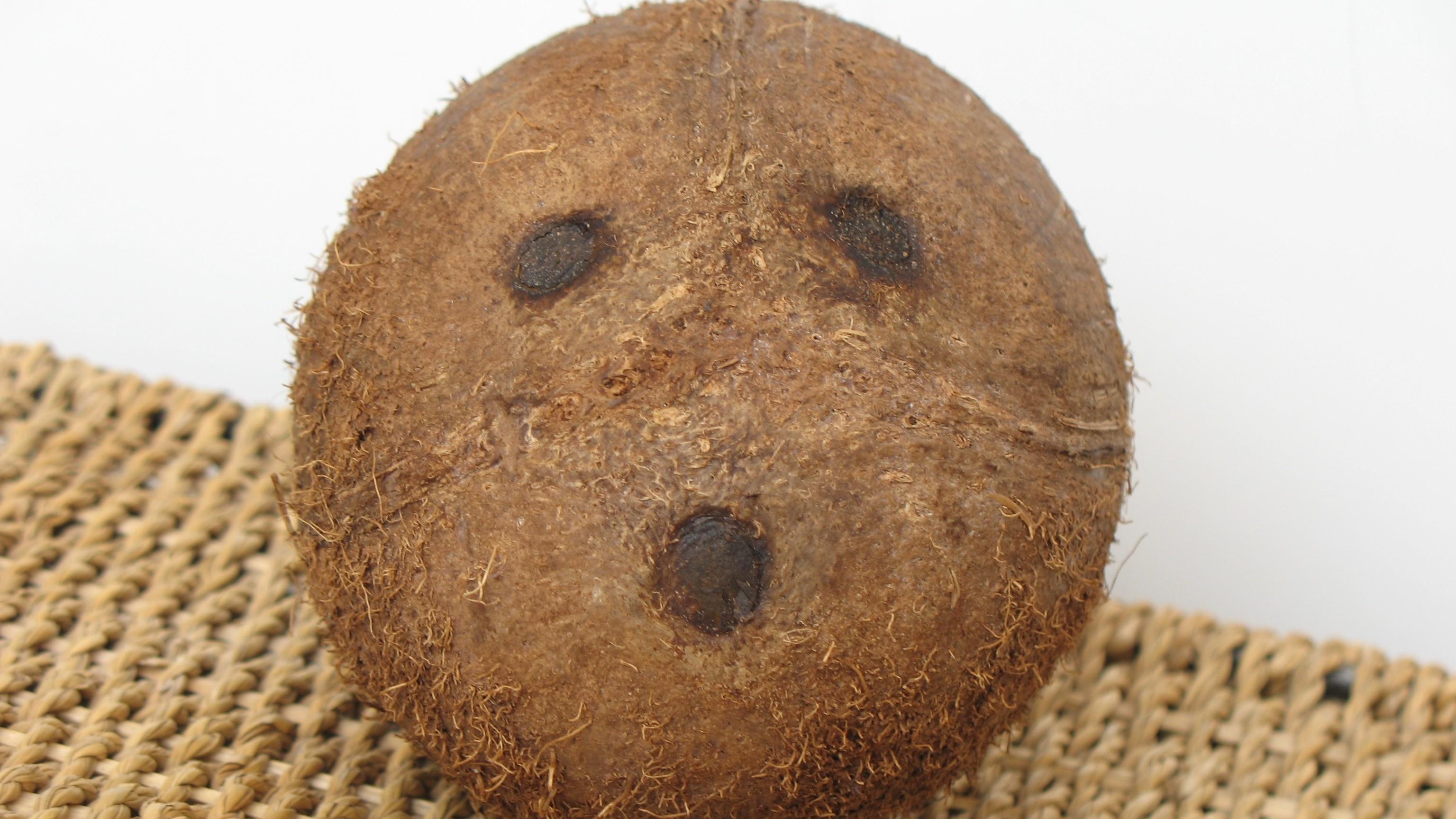 Смешные картинки с кокосом, поздравлениями юбилеем