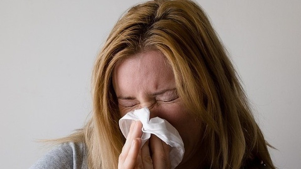 Как проявляется аллергия на кошек: симптомы и варианты лечения