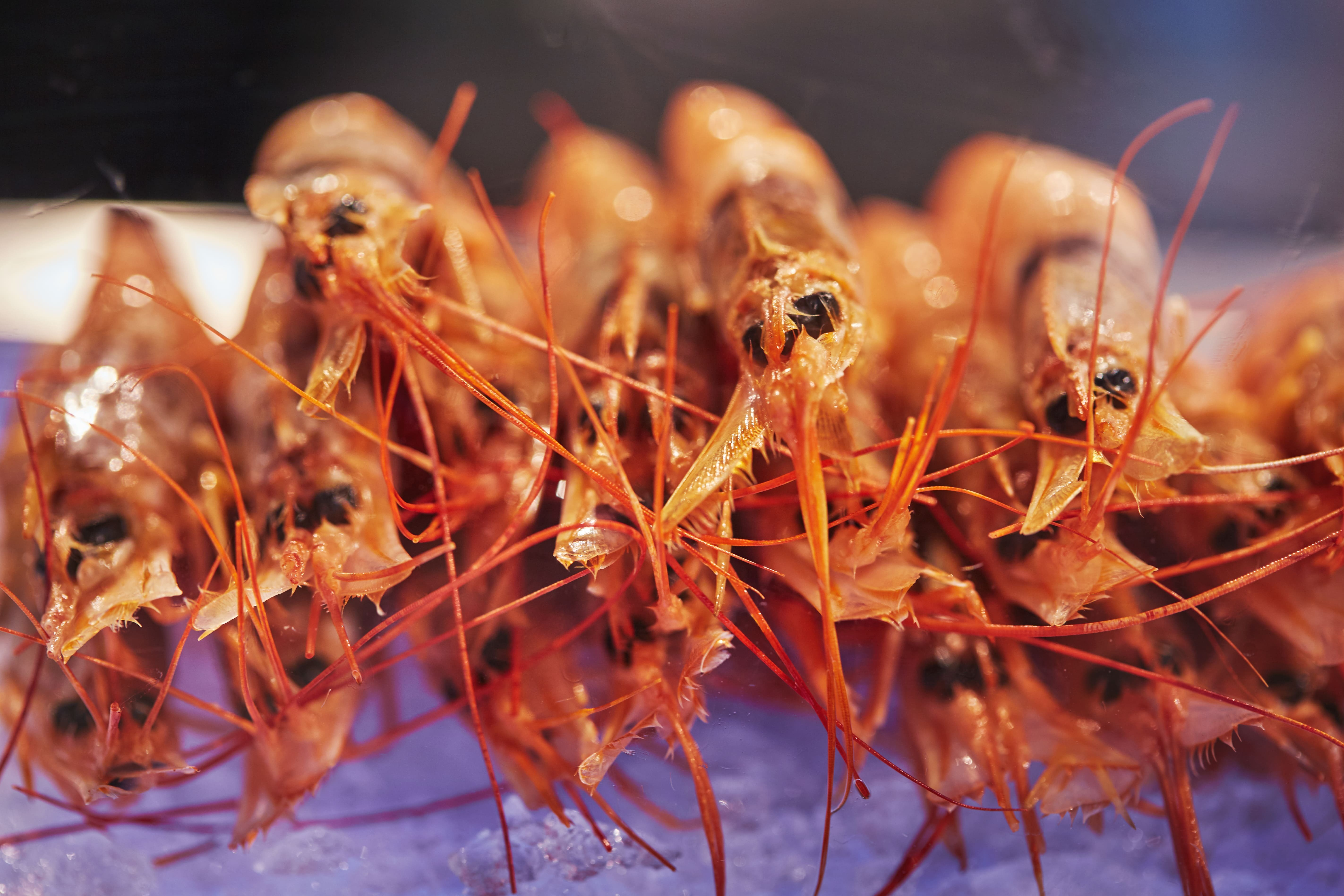 Шеф рекомендует: как определить свежесть морепродуктов