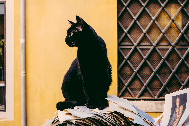 5 знаков зодиака, которым чаще всего перебегает дорогу черная кошка