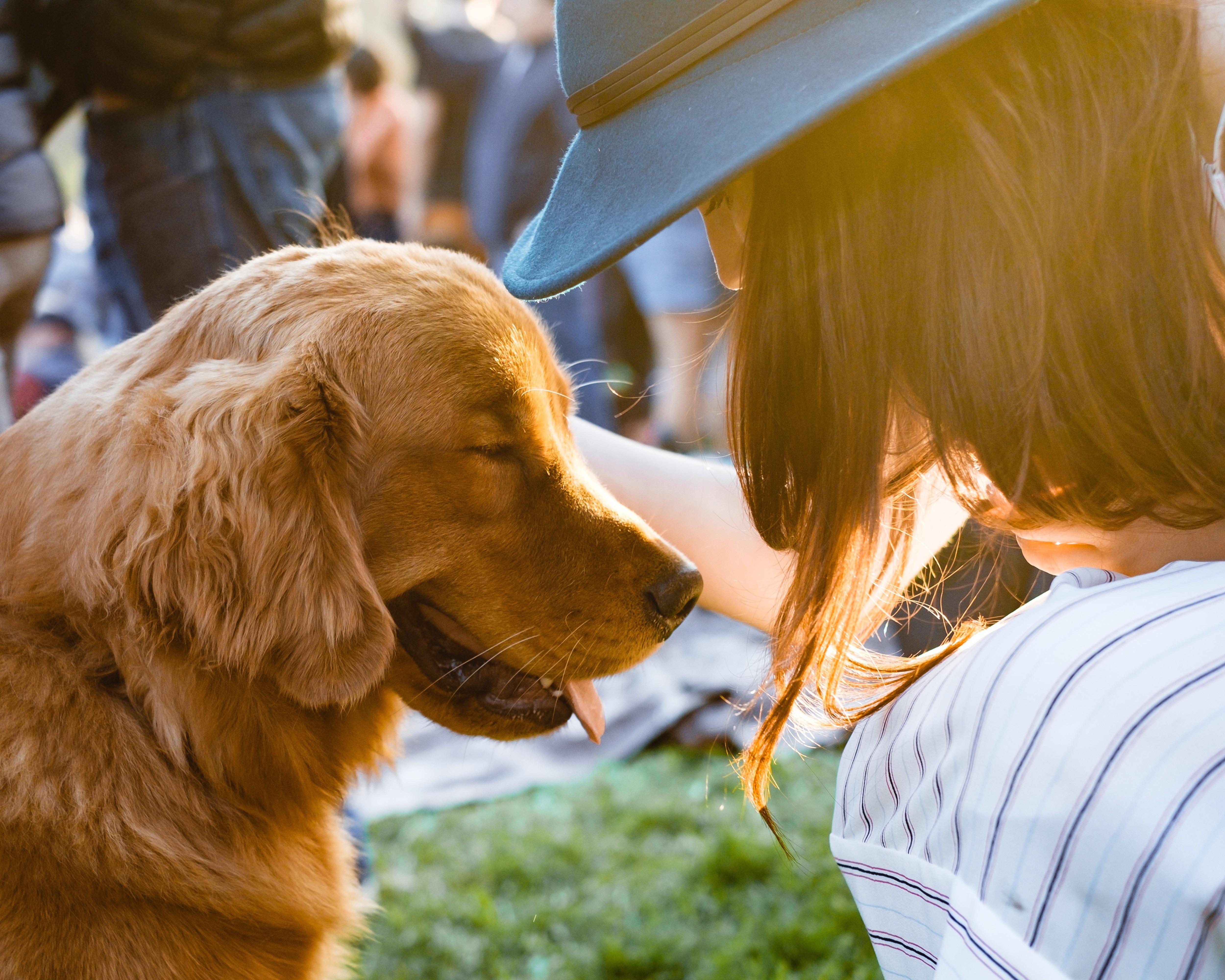 Домашние животные по знаку зодиака: как выбрать свое