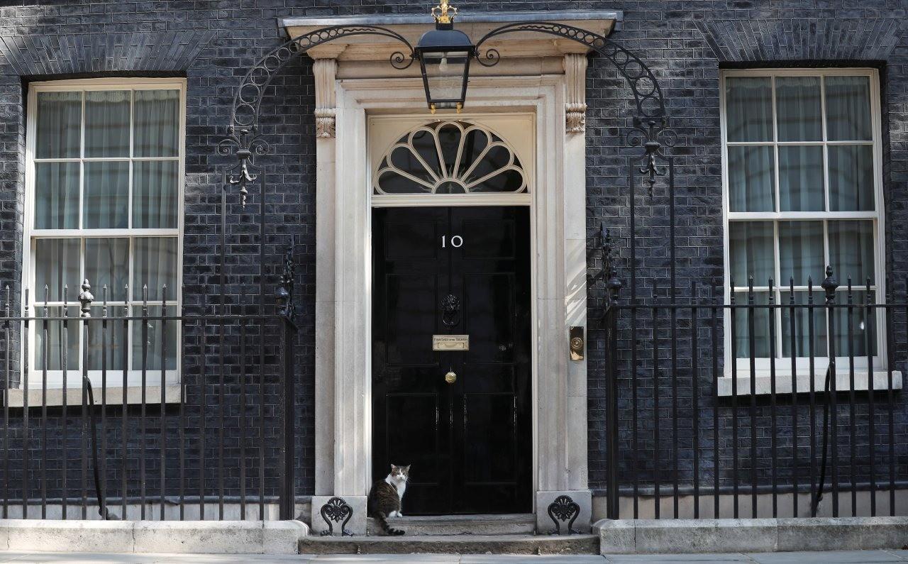 Британцы после отставки Терезы Мэй предложили сделать премьер-министром страны кота Ларри