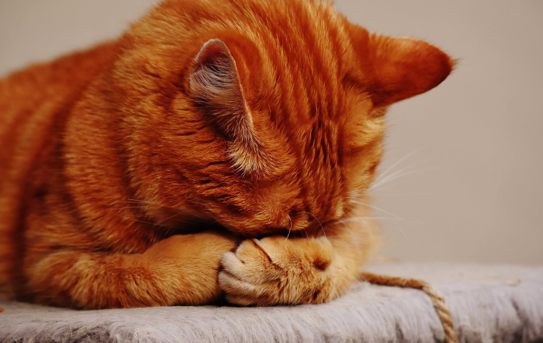 Друг человека: чем можно заразиться от кошки и других домашних питомцев
