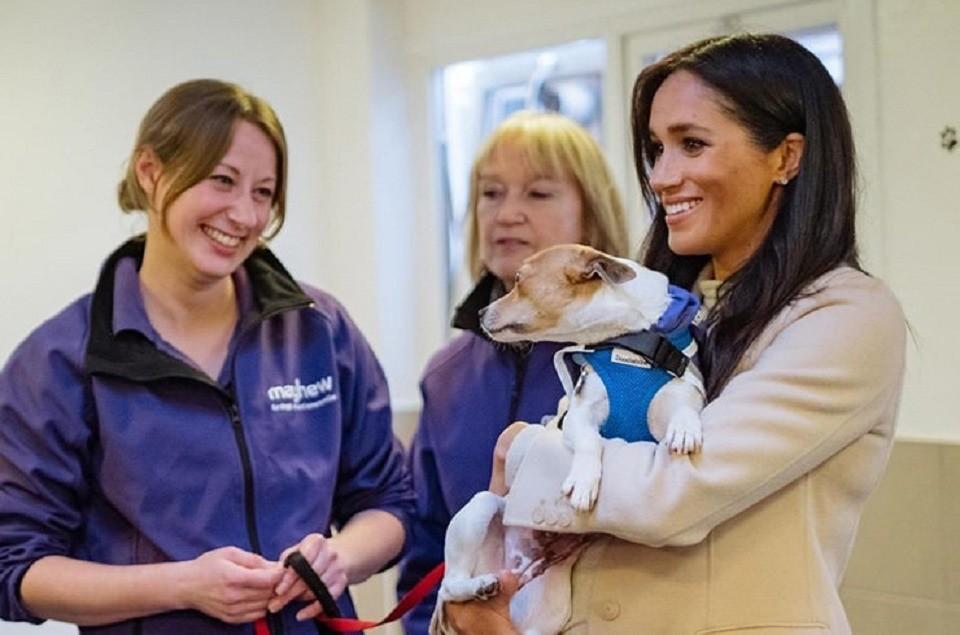 Меган Маркл взяла под опеку приют бездомных животных