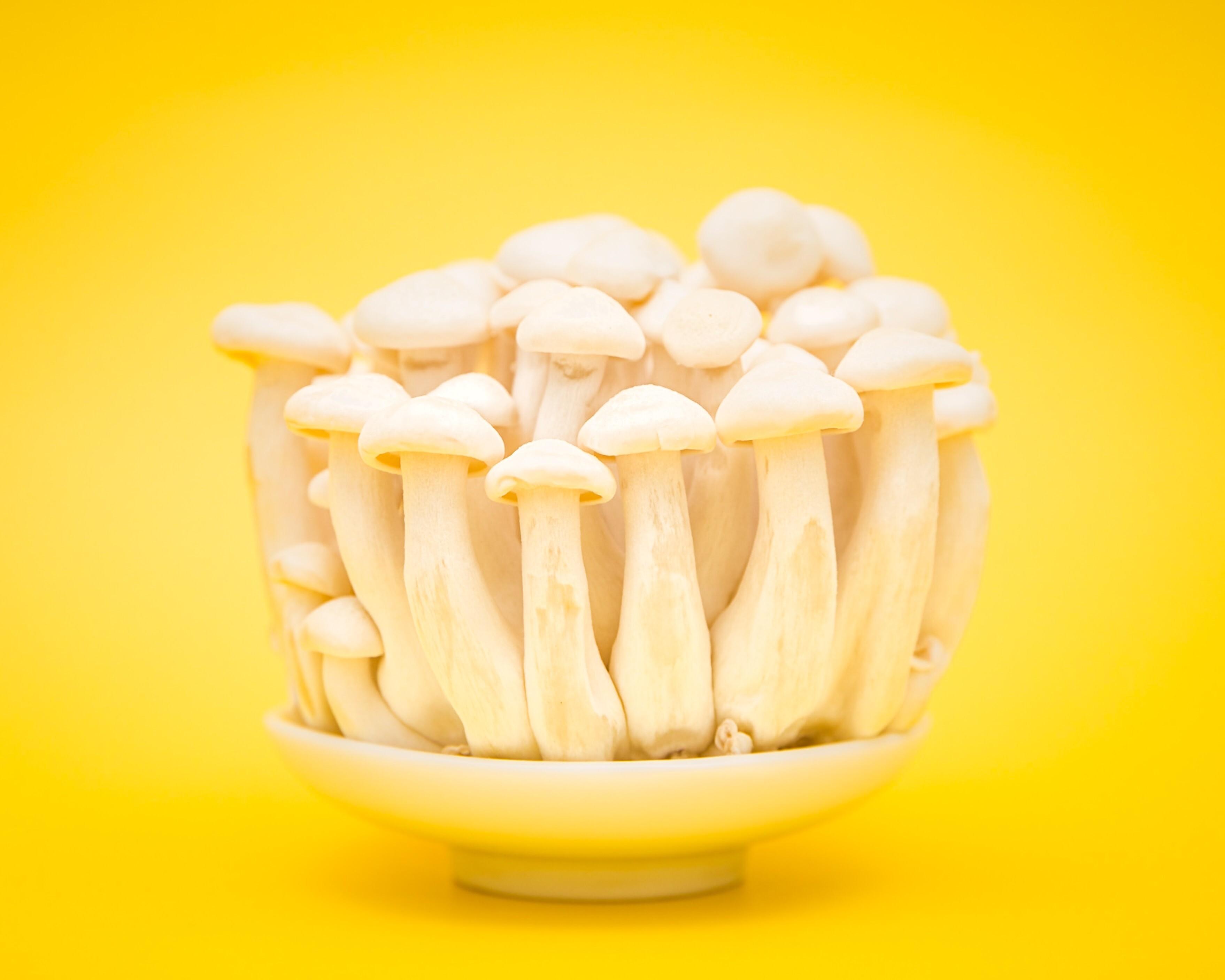 Как заморозить белые грибы на зиму: справится даже ребенок